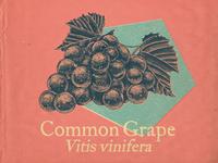 Common Grape