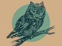 Speed Owl