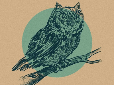Speed Owl 2d digital painting ipad pro procreate sketch drawing illustration animal birb bird screech owl