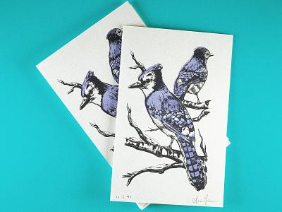 2019 Xmas Cards printmaking riso ipad pro procreate digital painting risograph illustration bird bluejay greeting card christmas xmas