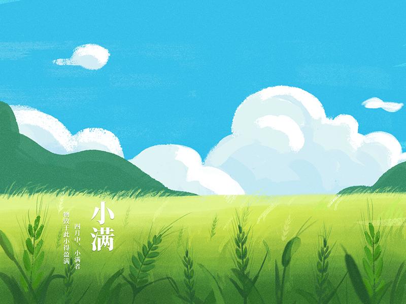 Xiao Man outdoor field summertime cloud wheat green blue sky 插图
