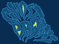 Ghost Brains