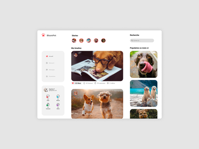 BloomPet Website social network like pets desktop website web design ux ui