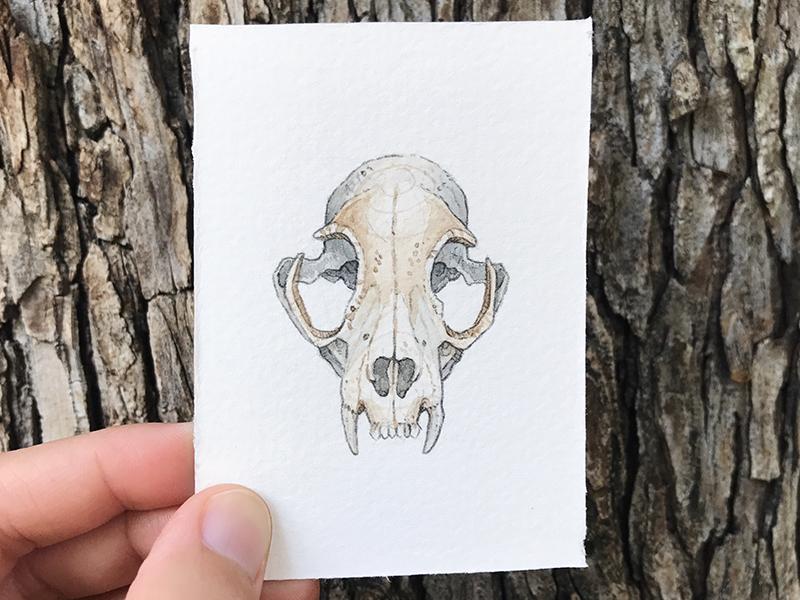 Bobcat Skull skull watercolor illustration botanical