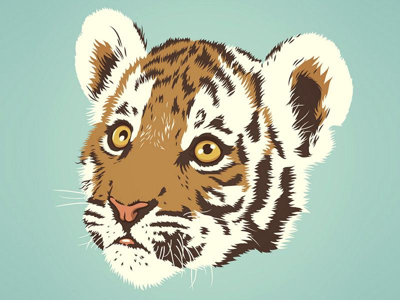 Tiger Cub illustration