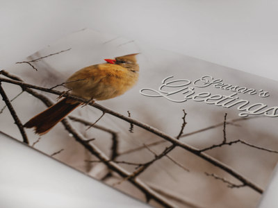 put a bird on it | corporate holiday card photo editing print design typography