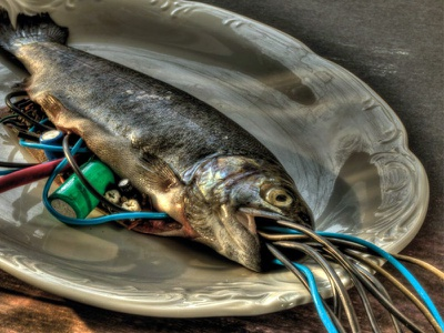 Cyberfish - HDR Photo fish trout cyber fish photogaphy hdr photo