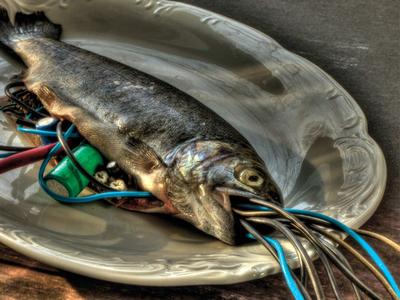 Cyberfish - HDR Photo fish trout cyber fish photogaphy hdr photo