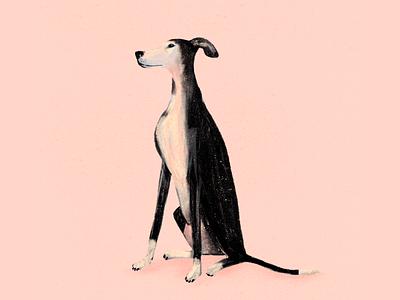 Greyhound portrait pink procreate greyhound dog