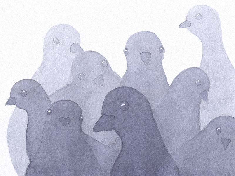 Pigeons wallpaper ipad iphone wallpaper watercolour birds pigeons