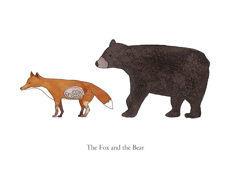 The Fox and the Bear animals book children ink watercolor watercolour illustration bear fox bearandfox foxandbear