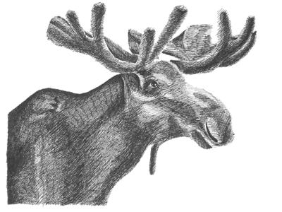 Moose art traditional bw character texture ink illustration pen elk moose