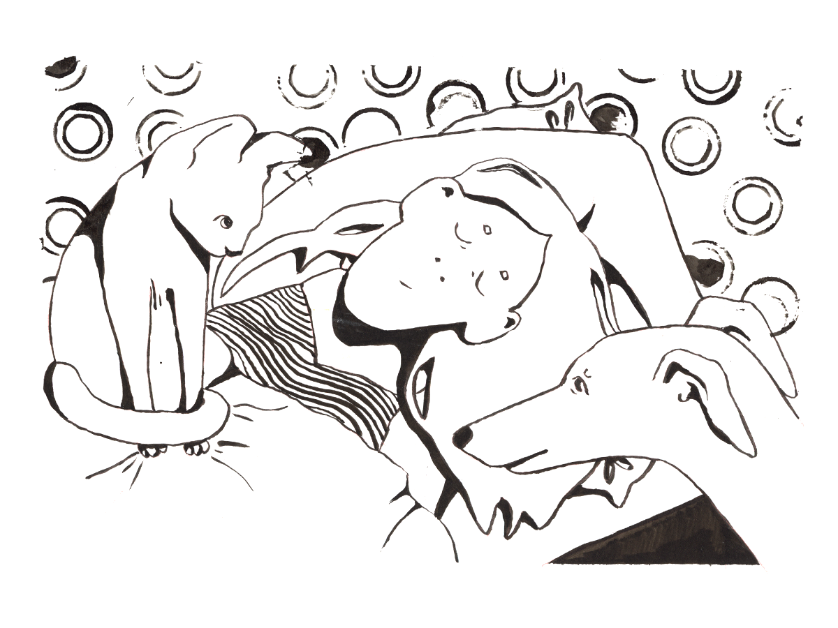 Wake up there sphynx whippet cat dog pen ink illustration