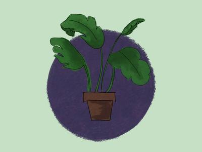 Palm Plant illustration