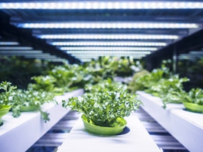 The Advantages Of Making Use Of Light-Emitting Diode Grow Lights