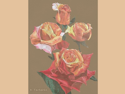 Roses By K. Fairbanks still life color pencils traditional media nature floral stilllife flowers roses drawing