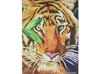 Tiger Watercolor Painting By K. Fairbanks