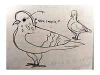 Pigeon Shapes