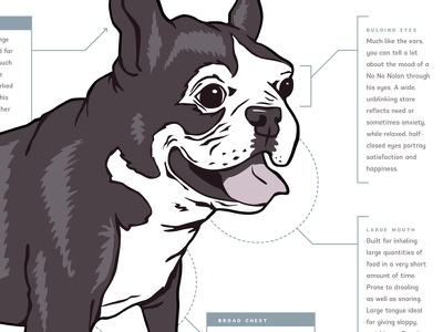 Boston Terrier Anatomy poster diagram dog boston terrier