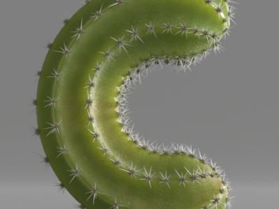 C for cactus