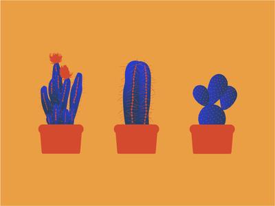 Cactus clean minimal design illustration