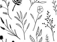 Flower Doodles