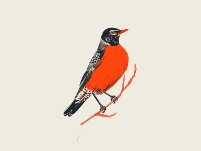 robbin halftones procreate sketch life drawing bird robbin halftone illustration