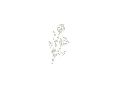 Floral illustration botanical