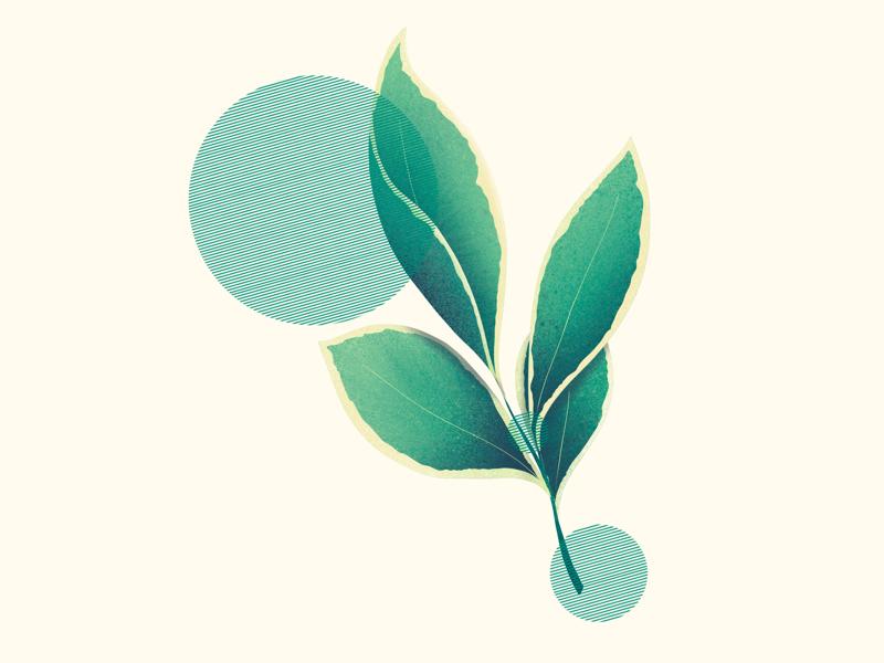 Leaf #2 vegan green drawing illustration nature leaf