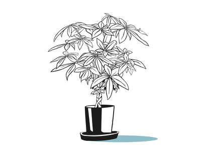 plant bb #2 design vector illustration