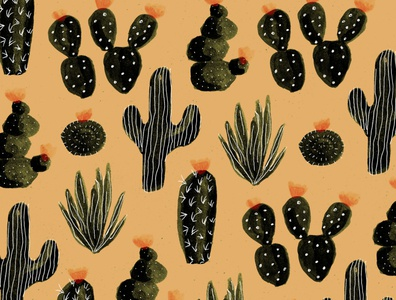 A few more cacti