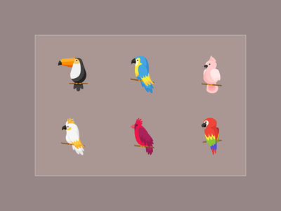 Color flat icons: Exotic birds web vector bird illustration design graphic color icon flat dribbble
