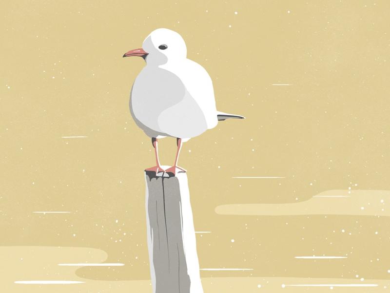 Seagull study illustration bird seagull