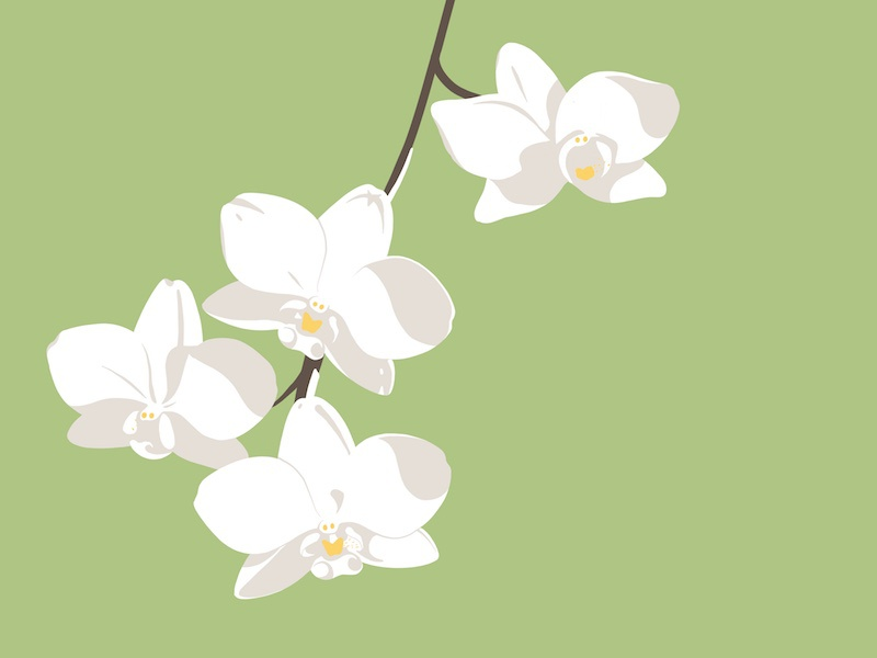 Orchid green procreate ipadpro illustration spring bloom flower orchid