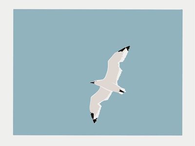 Seagull sky procreate illustration seagull