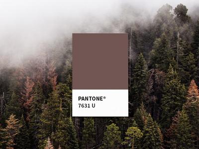 AKG Brand Color Exploration