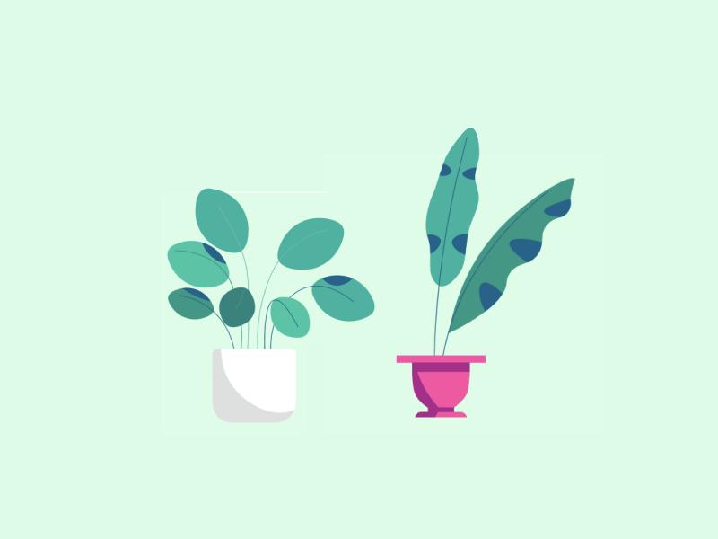 Plants succulent leaves cactus leaf animation illustration plants