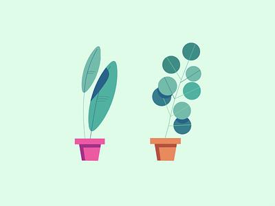 Plants cactus succulent leaf illustration plants