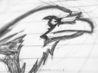 Houston Ravens   Sketching & Reference