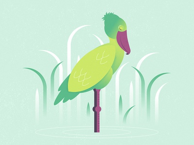 Shoebill green grass water nature illustration bird animal