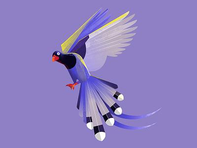 Bird of paradise illustration violet animal bird of paradise bird