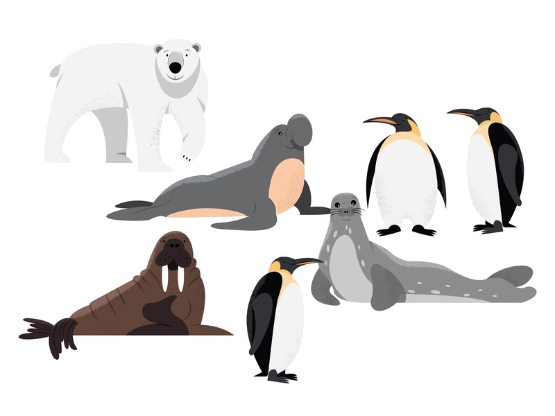 Animals | part 1 illustration walrus elephant seal penguin seal polar bear arctic animals
