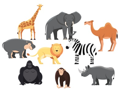 Animals   part 3 illustration rhinoceros chimpanzee gorilla zebra lion hippo hippopotamus camel elephant giraffe animal