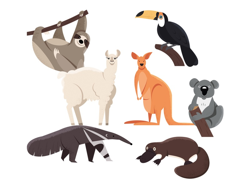 Animals | part 4 platypus ant-eater koala kangaroo lama toucan sloth animal