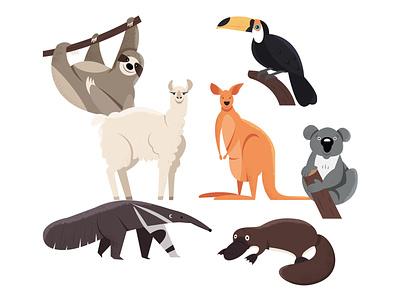 Animals   part 4 platypus ant-eater koala kangaroo lama toucan sloth animal