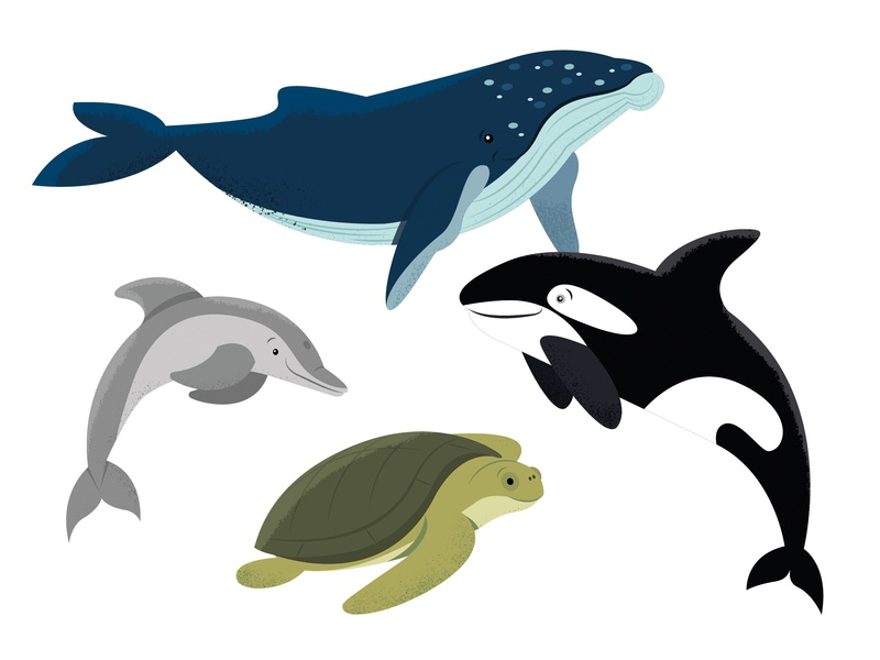Animals | part 5 illustration dolphin turtle orca whale animal animals
