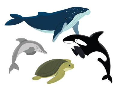 Animals   part 5 illustration dolphin turtle orca whale animal animals
