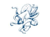 Illustration - Octopus