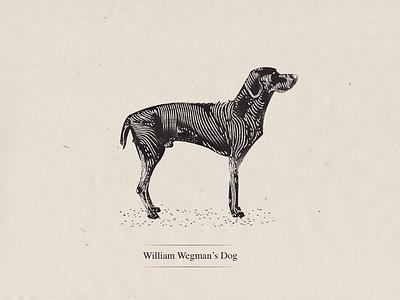 Wegman's Dog weimaraner dog photographer wegman