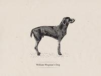 Wegman's Dog